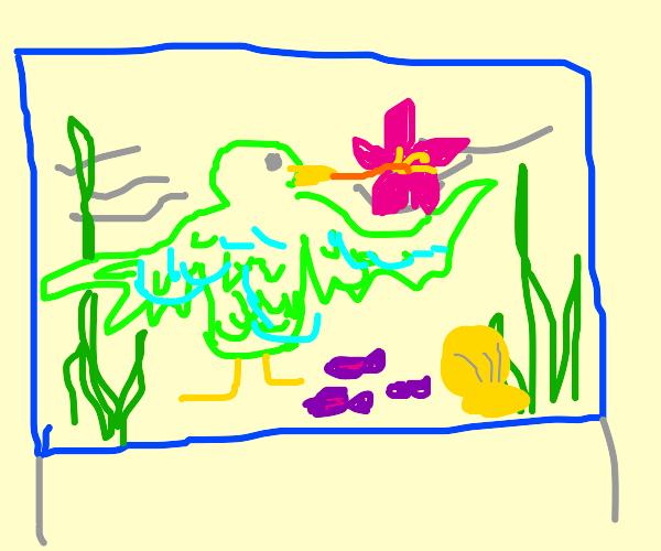 Hummingbird in an Aquarium