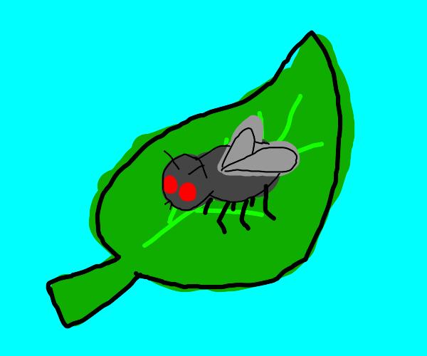 Fly on a big leaf