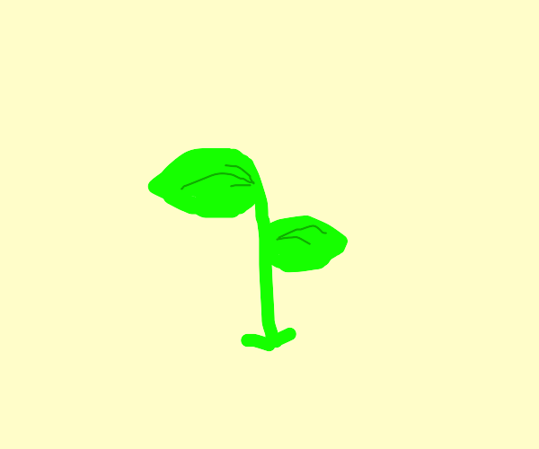 A sprout.