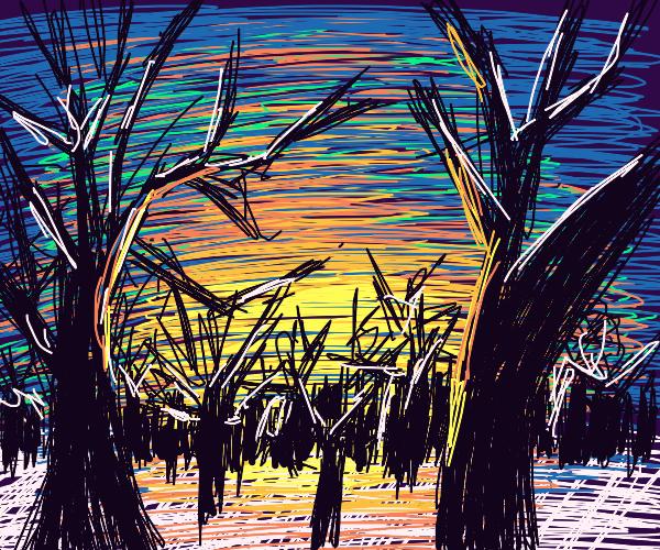 forest sunrise