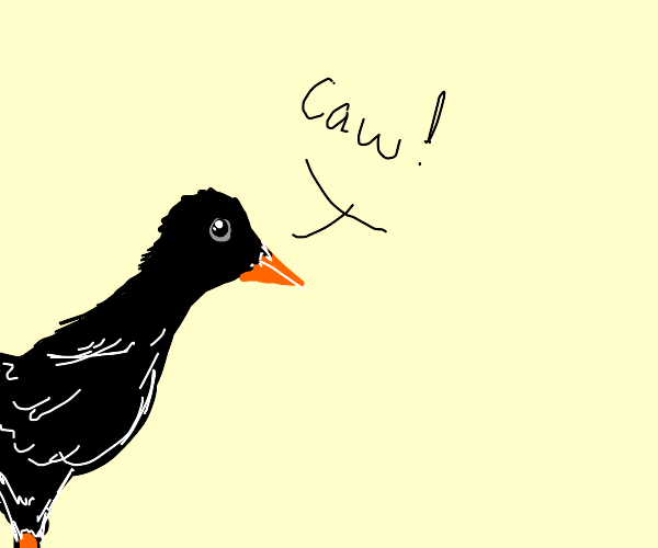 Crow caws