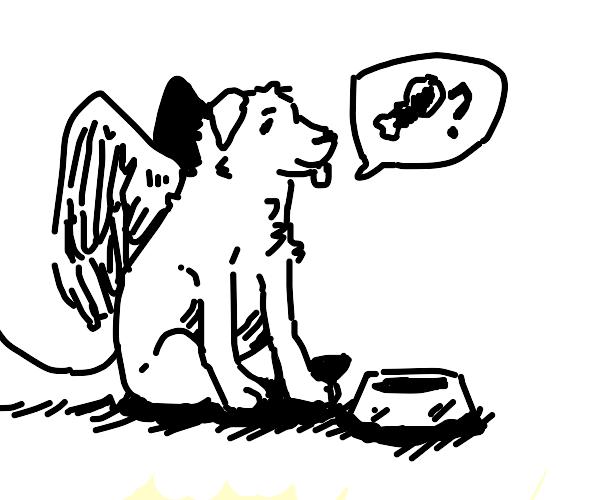 winged dog wants food