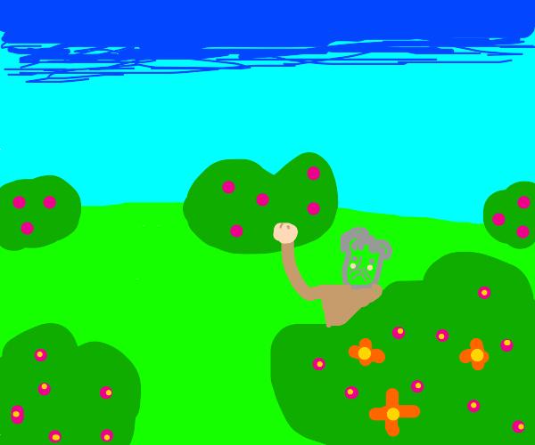 old man hides behind a flowered bush menacing