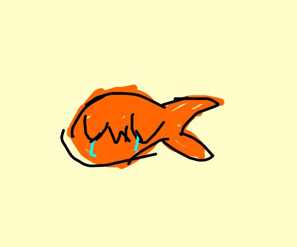 sad gacha uwu fish