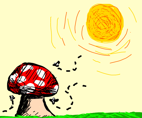 fly agaric and a sun