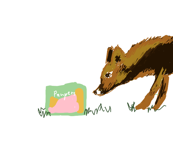 Fox finds a Diaper
