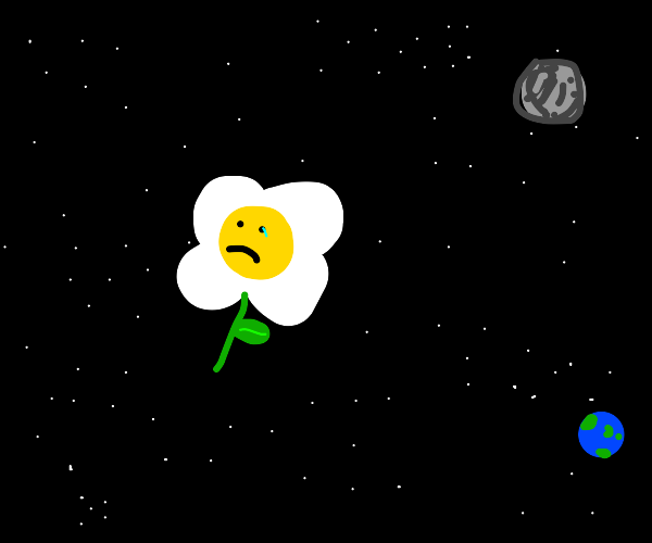 Flower contemplates life in space
