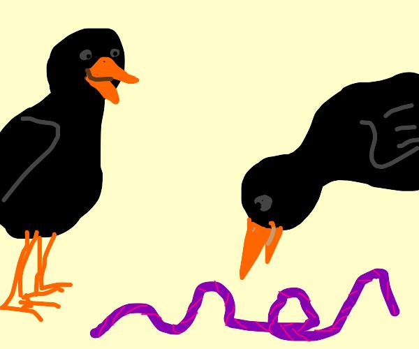 Crows like purple string
