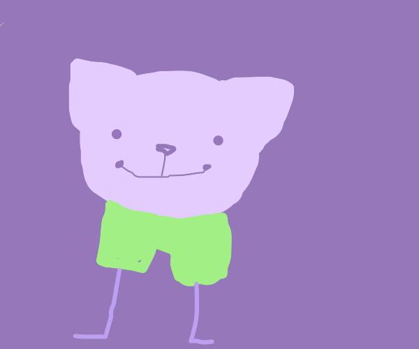 sad cat with green pants