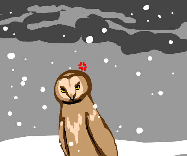 Angry owl in the snow