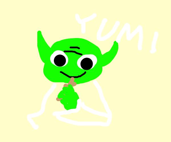 Yoda enjoys eating sticks