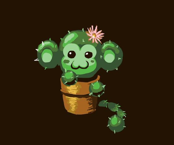 Monkey cactus in a flower pot