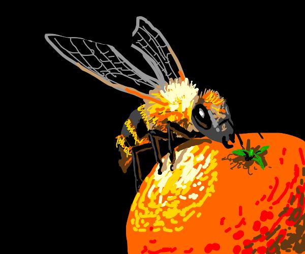 Honeybee perched on a tiny orange