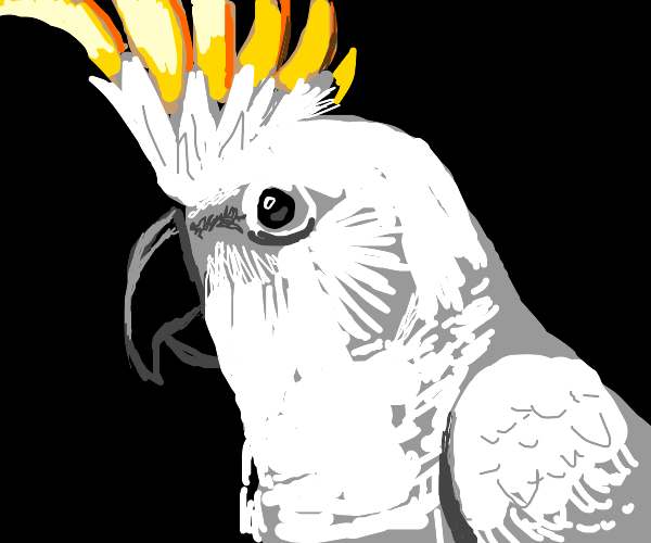 Fluffy cockatoo