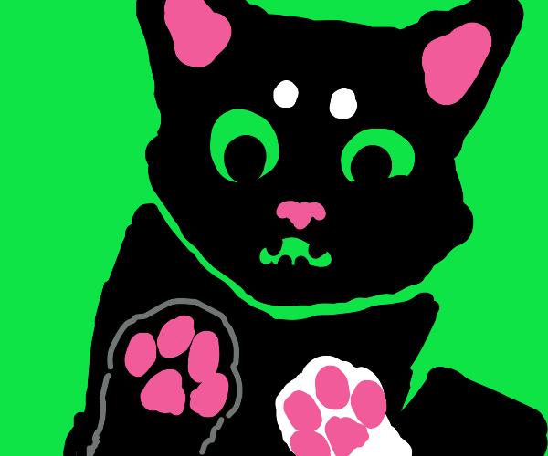 screamy black cat