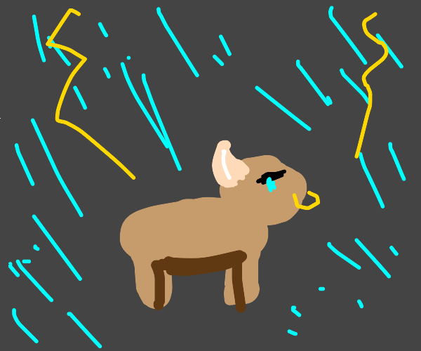 bull crying in thunderstorm