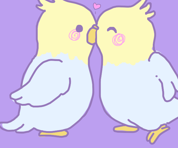 two cockatiel buddies playing :)))