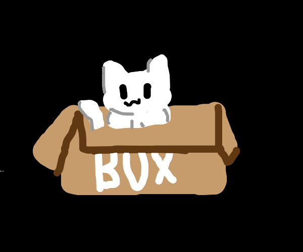 fluffy white cat inside a box that says box
