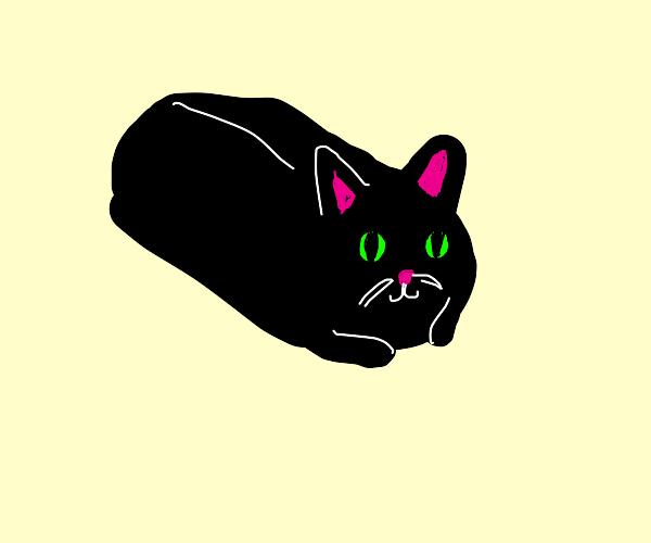 black cat loaf
