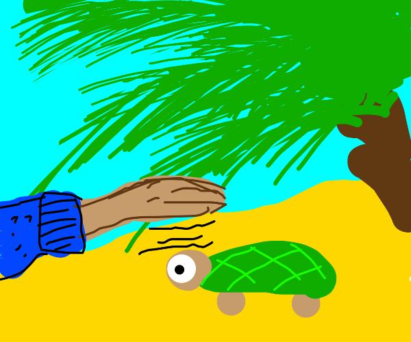 Turtle vibe check