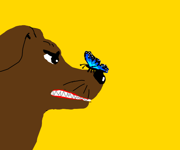 Dog mad with the butterfly on its nose