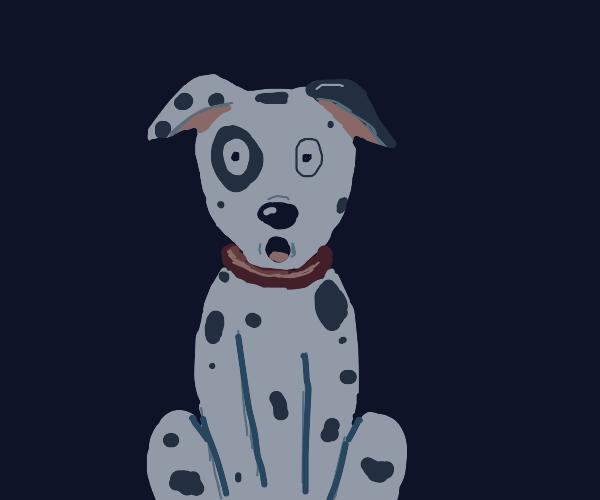 Dalmatian is surprised