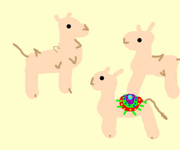 group of lamas, but one has a colorful saddle