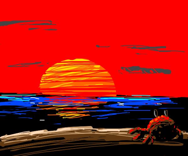 Crab watches sun set on beach