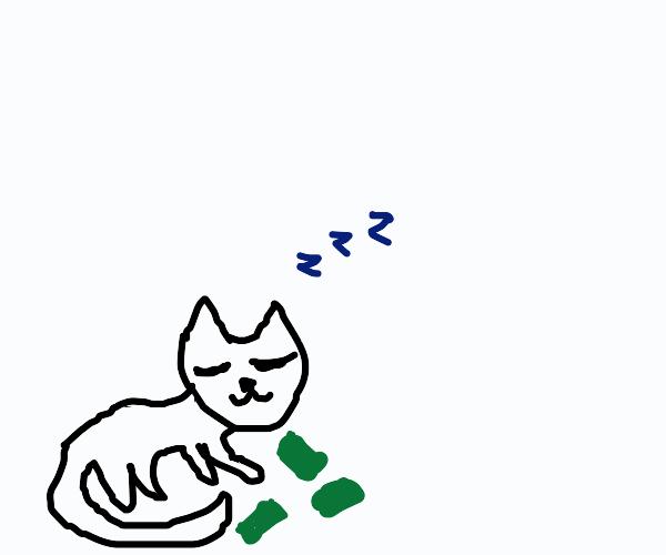 cat sleeping with money