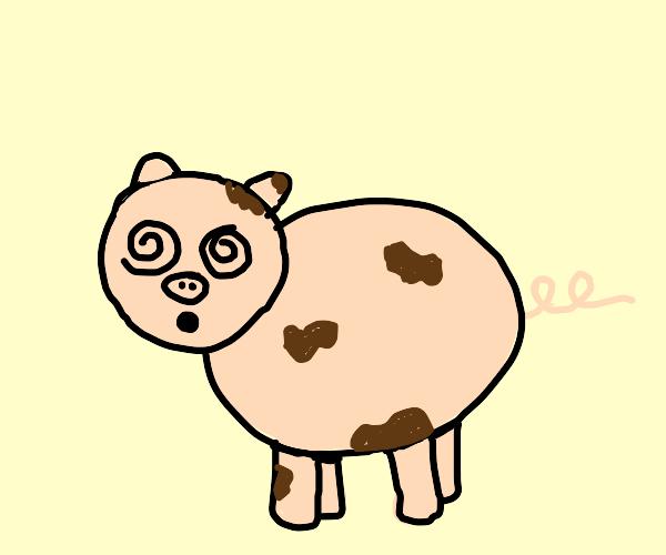 dirty dazed pig
