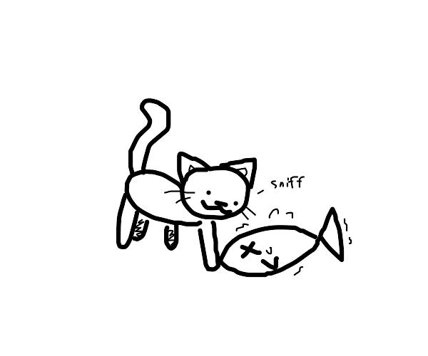 cat sniffs fish