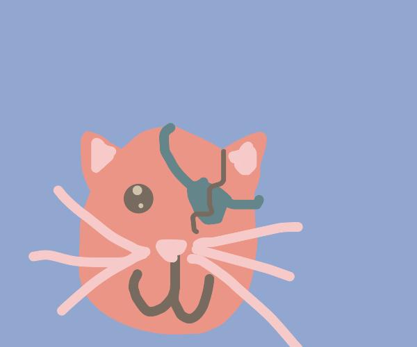 cat lost his eye
