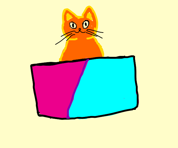 Cat in pink and blue box