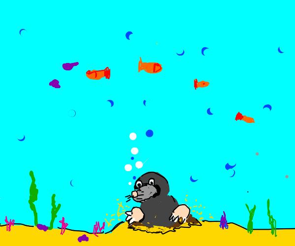 Mole underwater.