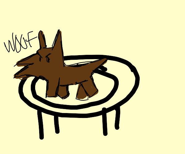 a mmad dog on a trampoline