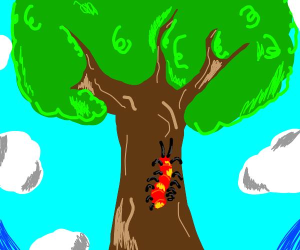 Centipede climb up a tree