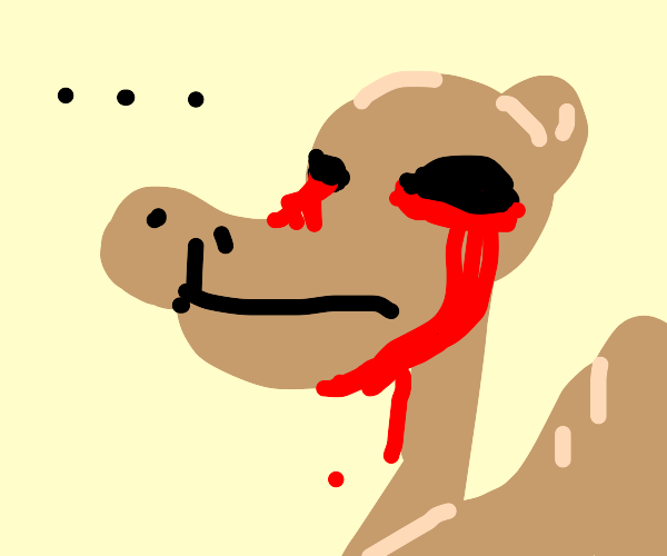 Camel crying blood