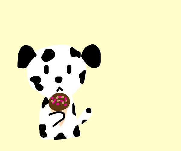 Dalmatian eating icecream