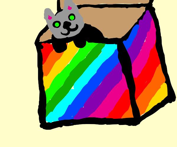 A cat in a colourful box