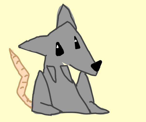 Triangle Rat