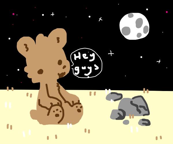 bear talking to stars and rocks