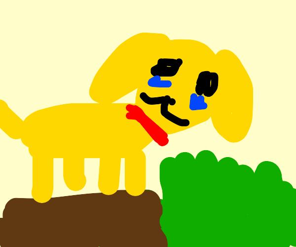Dog cries about grass
