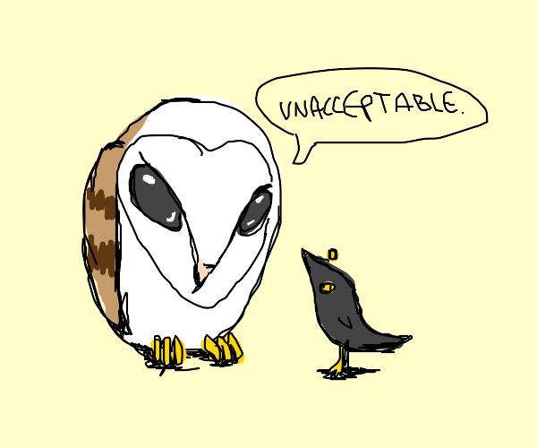 Owl says no to black birbs