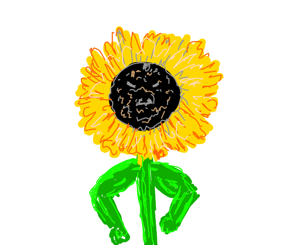 buff armed sunflower