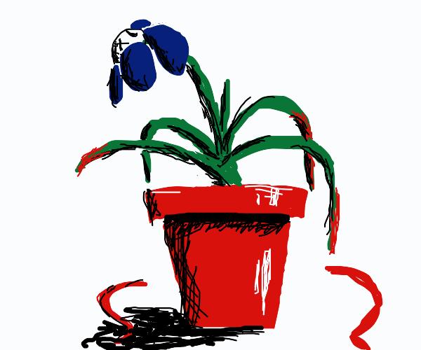 Goodbye, planty...