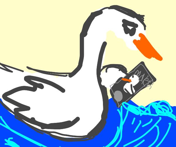 Sad swan tries to find a girlfriend