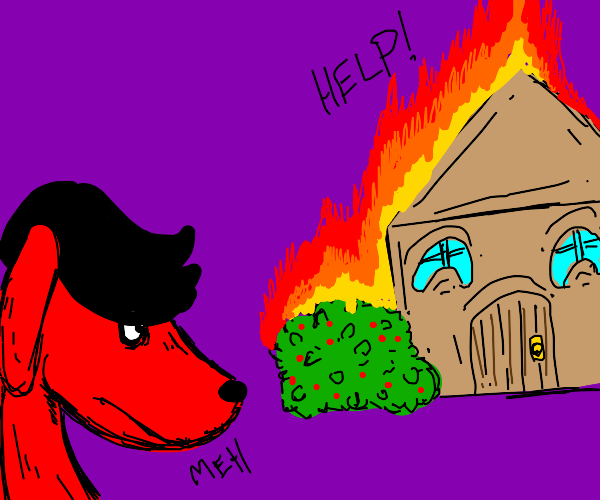Emo red Dog watches house burn, Doesn't care