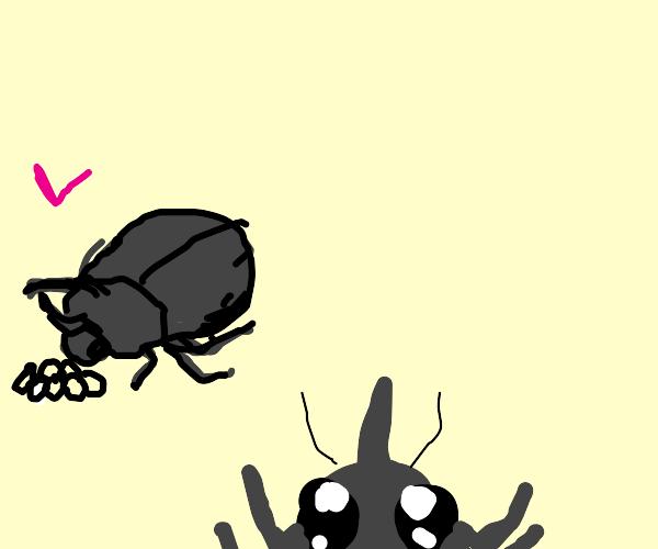a beetle family