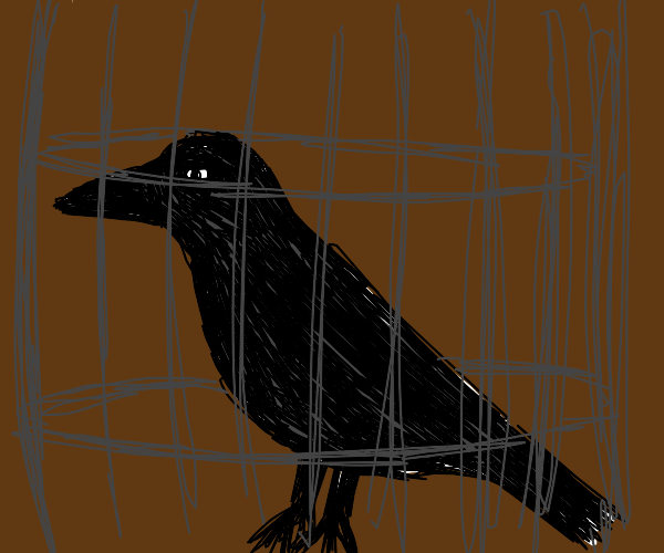 A crow in a cage