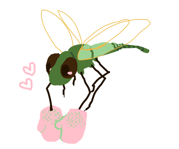 Dragonfly wearing Gloves